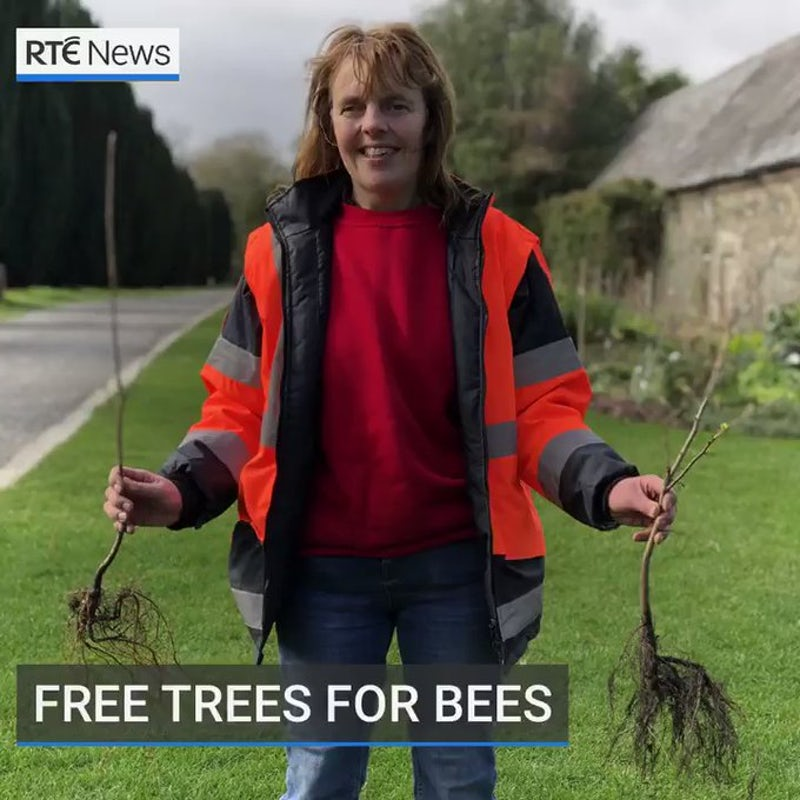 Meet the woman who is giving away over 1,000 trees to make Fingal greener